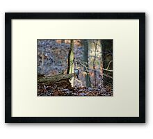 A touch of blue beauty on a brown fall day Framed Print