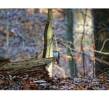 A touch of blue beauty on a brown fall day Photographic Print