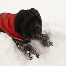 Izzy Bear in the Snow by Vicki Spindler (VHS Photography)