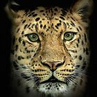 Big Cats by Mark Hughes