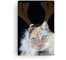 Christmas Max Canvas Print