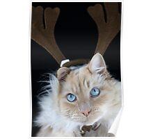 Christmas Max Poster