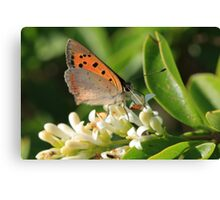 meadow brown Canvas Print