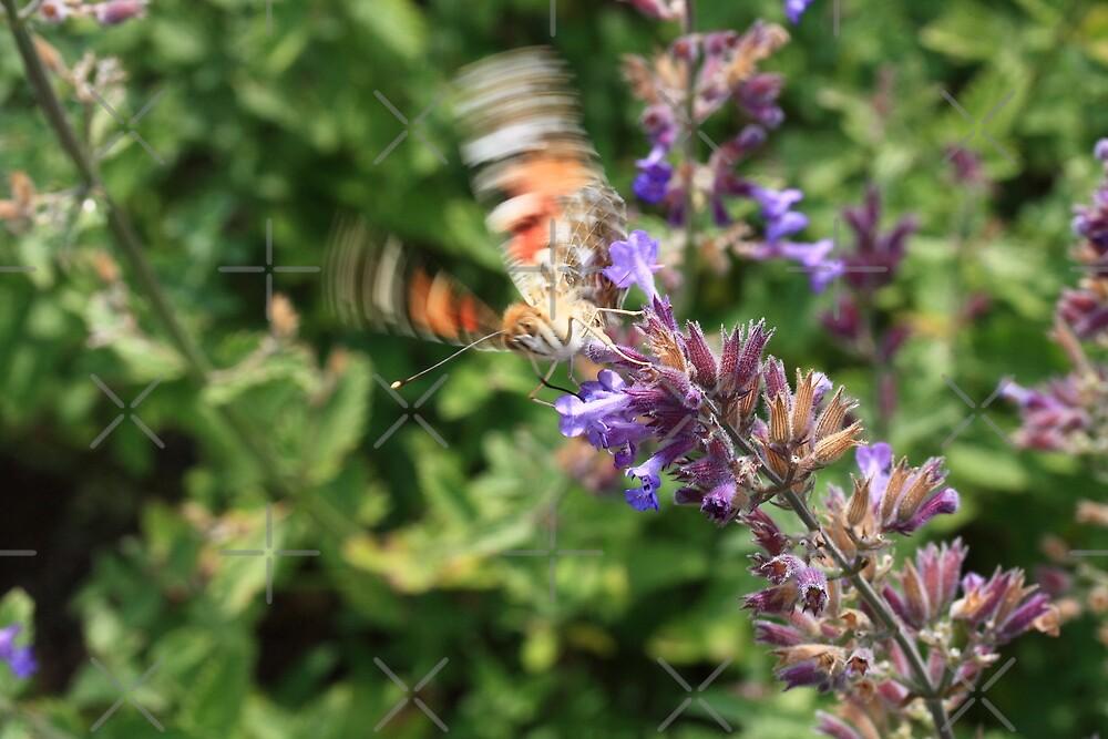 butterfly start by Jicha