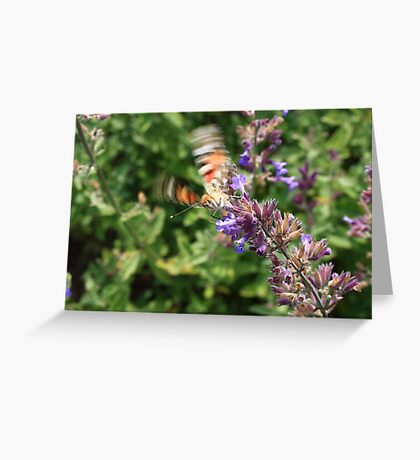 butterfly start Greeting Card