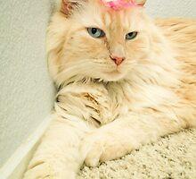 Max the Cat by rachel3612