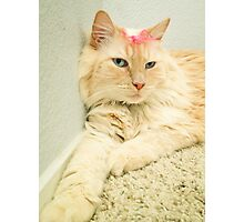 Max the Cat Photographic Print