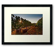 Vine harvest Framed Print