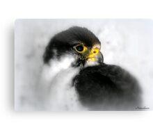 You Want Cute? Canvas Print