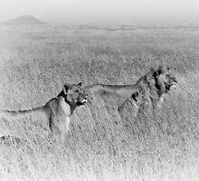 """""""Pride"""" (B&W) by Andreas Koerner"""