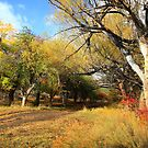 Autumn Apple Orchard by Arla M. Ruggles