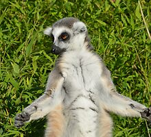 Lemur Meditating by Pauws99