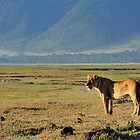 """Queen of Ngorongoro"" by Andreas Koerner"