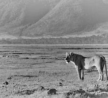 """Queen of Ngorongoro"" (B&W) by Andreas Koerner"