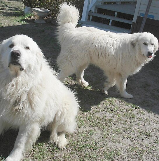 Duke and Frost, the Snowmen by May Lattanzio
