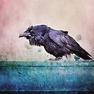 Words of a Raven by Priska Wettstein
