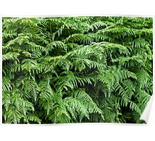 Fern texture background 1 Poster