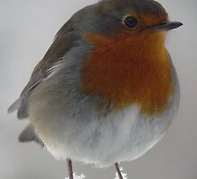 Robin by Wendy Williams