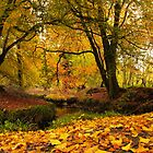 Golden Woods by Adrian McGlynn