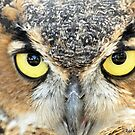 Great Horned Owl (Close up) by Jeff Ore
