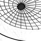Monoweb by dgscotland