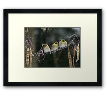 GOLDEN TRIO Framed Print