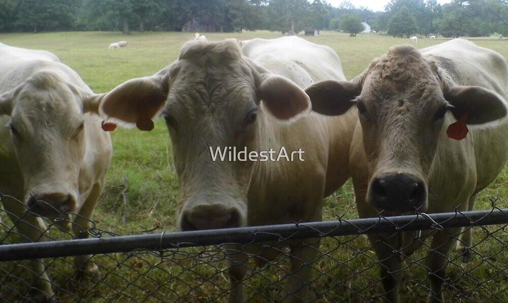 Mootown Presents! THE SUPREMES...(bovine version) by WildestArt