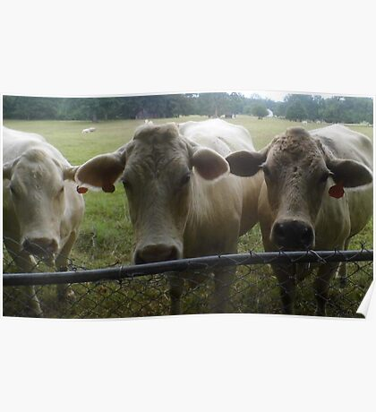 Mootown Presents! THE SUPREMES...(bovine version) Poster