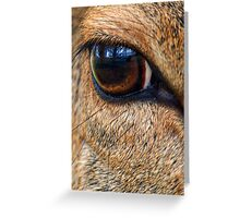 Up Close - Eye of a Deer Greeting Card