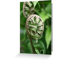 New Zealand Fern Frond Greeting Card