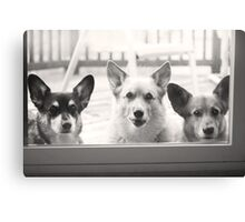 """How Much Are Those Corgis In The Window ?"" Canvas Print"
