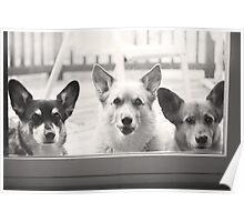 """""""How Much Are Those Corgis In The Window ?"""" Poster"""
