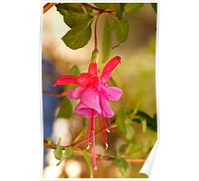 First fuschia for the season Poster