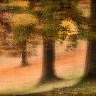 Four Trees by David  Guidas