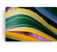 nature patterns Canvas Print