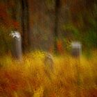Cemetery in the Woods by David  Guidas