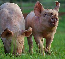 Piggie Pals by Clare McClelland