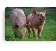 Piggie Pals Canvas Print