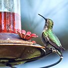 Ruby-throated Hummingbird (female) by KAREN SCHMIDT