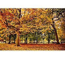 Autumn in Boston  Photographic Print