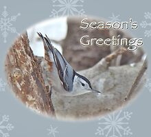 Season's Greetings Card - White-breasted Nuthatch Songbird by MotherNature