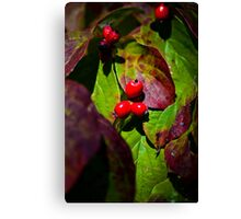 Dogwood in the Fall Canvas Print