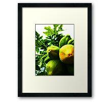 Pawpaw's abundance  Framed Print