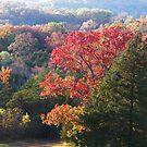 Autumn in the Ozarks #3 by John Carpenter