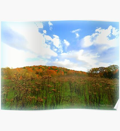 Ironweed Seedheads in Autumn Field Poster