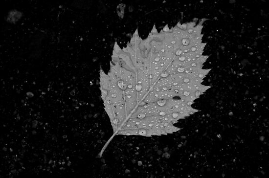 Rainy Day Leaf by Mark Jackson