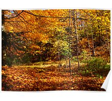 Fiery days of rustic charm Poster