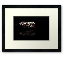Australian Moth Framed Print