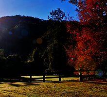 Autumn Beginnings by Sydney Lauren