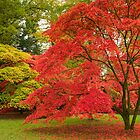 Westonbirt Autumn XI by Chris Tarling